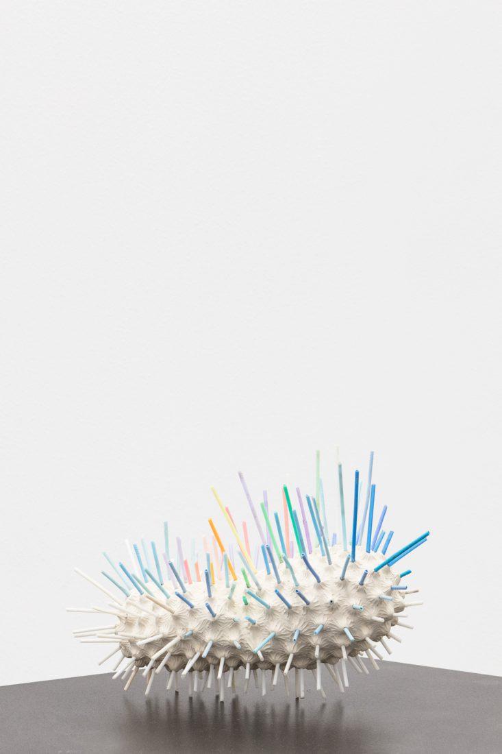 Foco Galeria Species Novae